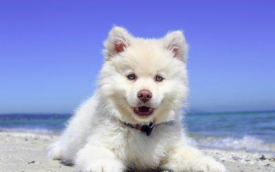 Comment travaille le comportementaliste canin ?
