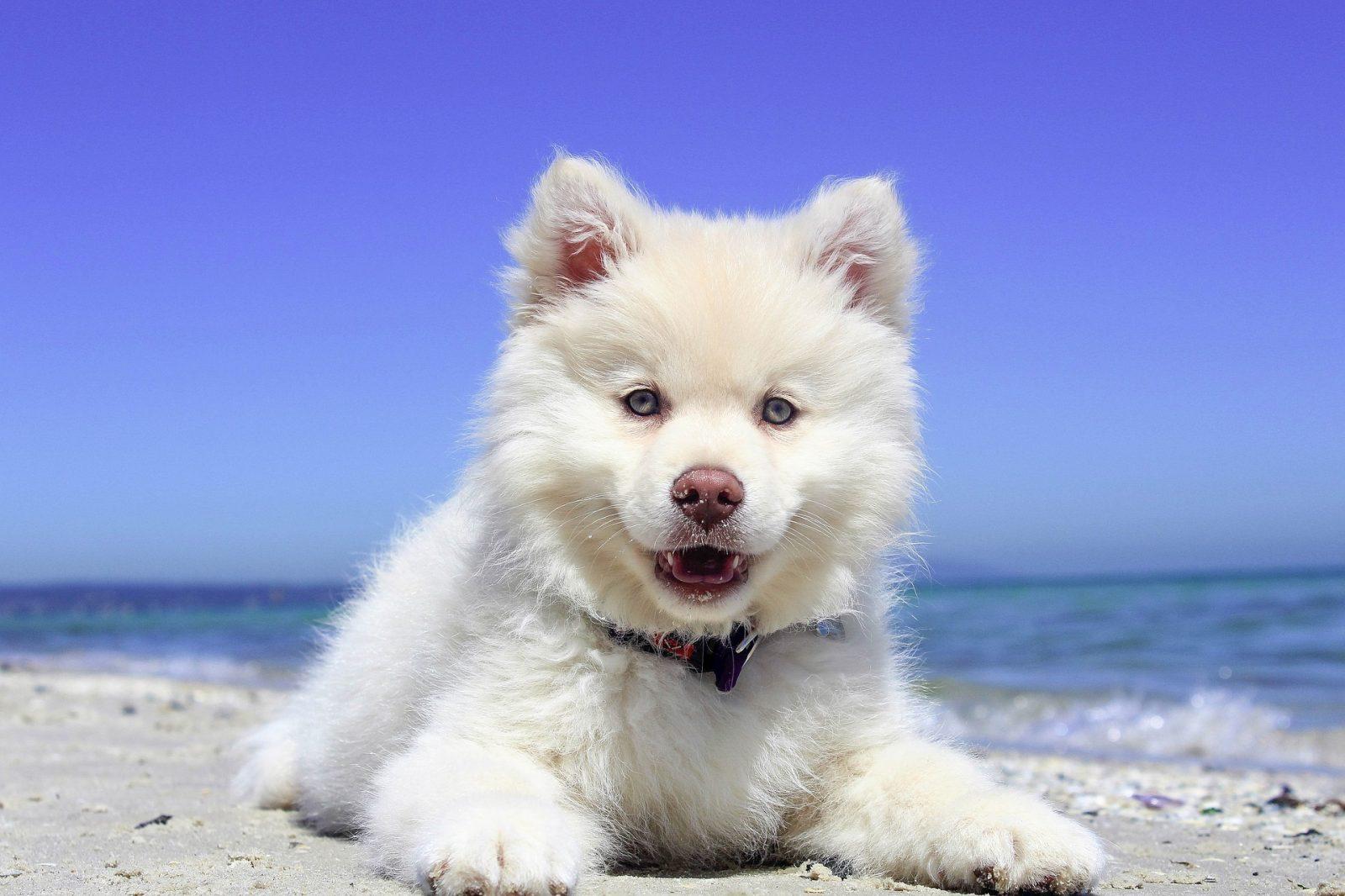 travail du comportementaliste canin