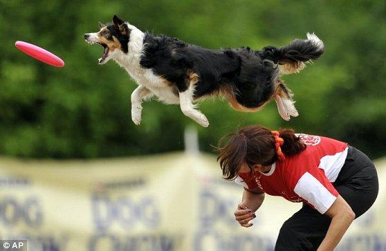 frisbee canin