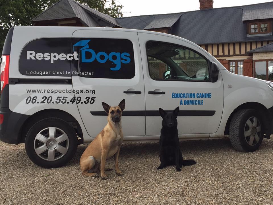 éducation canine respectdogs à rouen, évreux , le havre
