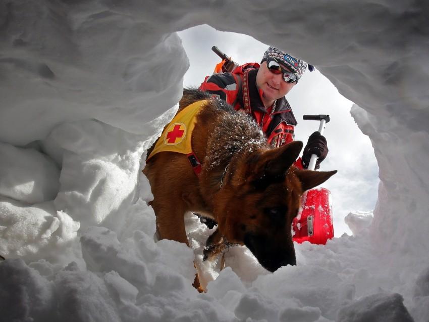 _big-14543-les-chiens-d-avalanche-anges-gardiens-de-la-montagne