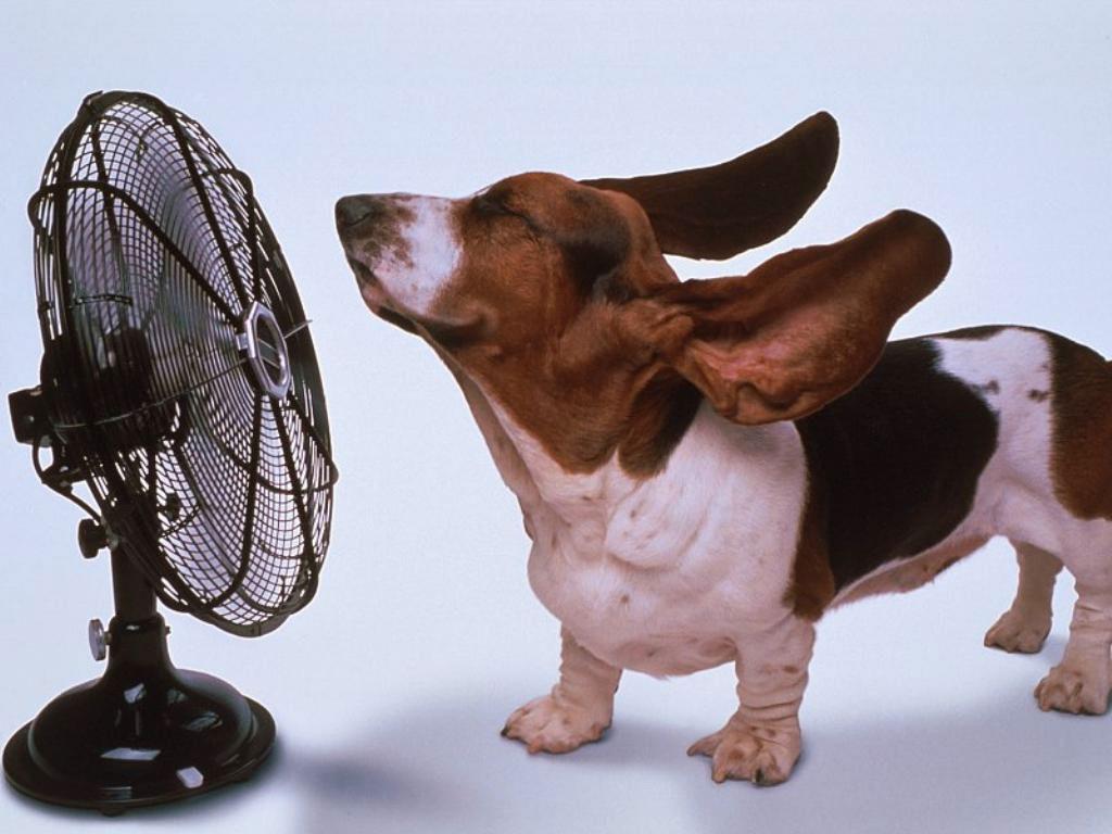 chien-qui-se-rafraîchit-avec-un-ventilateur