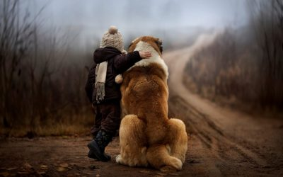 Les besoins du chien