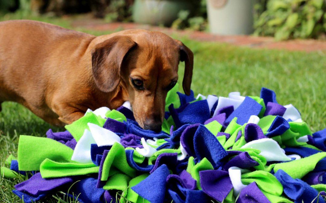 Snuffle mat : Comment fabriquer un tapis de fouille pour mon chien ?