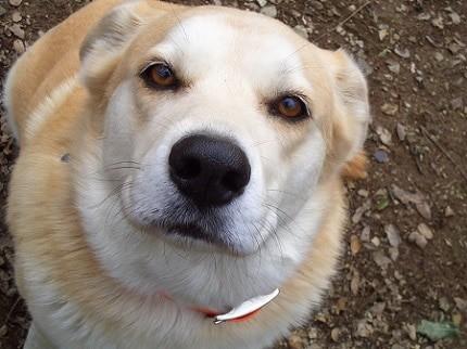 découvrez la vision d'un chien avec les comportementalistes respectdogs
