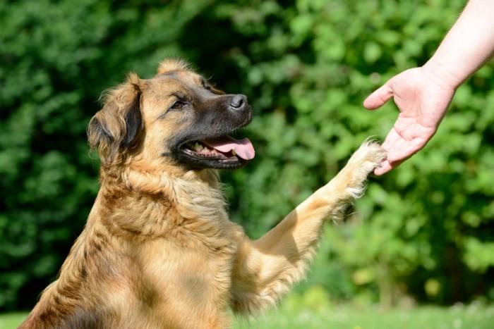 e-book pour rendre son chien plus heureux et obéissant
