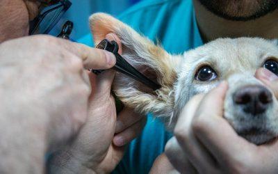 Zoom métier : Assistant Vétérinaire