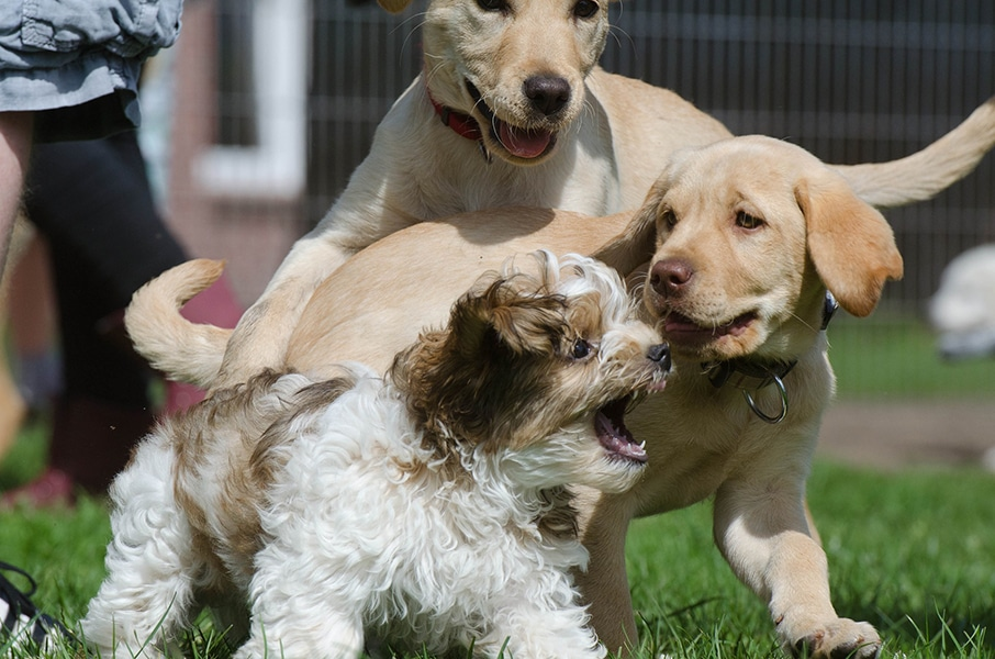 rassemblement-canin