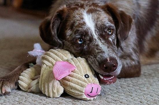 Les 4 conseils des vétérinaires et éducateurs canins pour avoir un chien qui reste sage en votre absence .