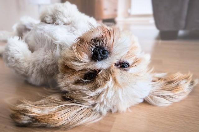 apprendre à son chien à rester seul sans faire de bêtises et des destructions grâce aux conseils des comportementalistes respectdogs