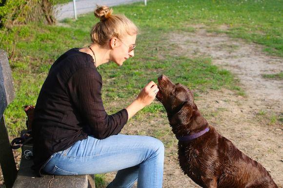 bien utiliser les récompenses est essentiel pour un bon apprentissage des ordres, les éducateurs canins comportementaliste vous révèle leur secret