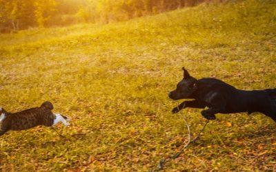La prédation chez le chien