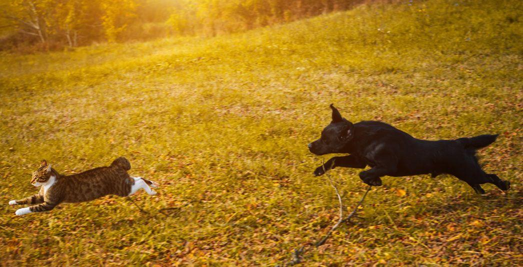 Comprenez le comportement de prédation de votre chien et apprenez à le maîtriser grâce aux conseils des éducateurs canins comportementaliste respectdogs