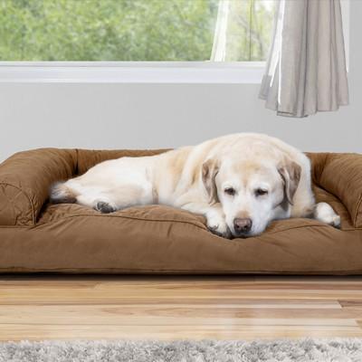 éducation canine en Normandie avec des éducateurs comportementalistes canins expert de la psychologie canine