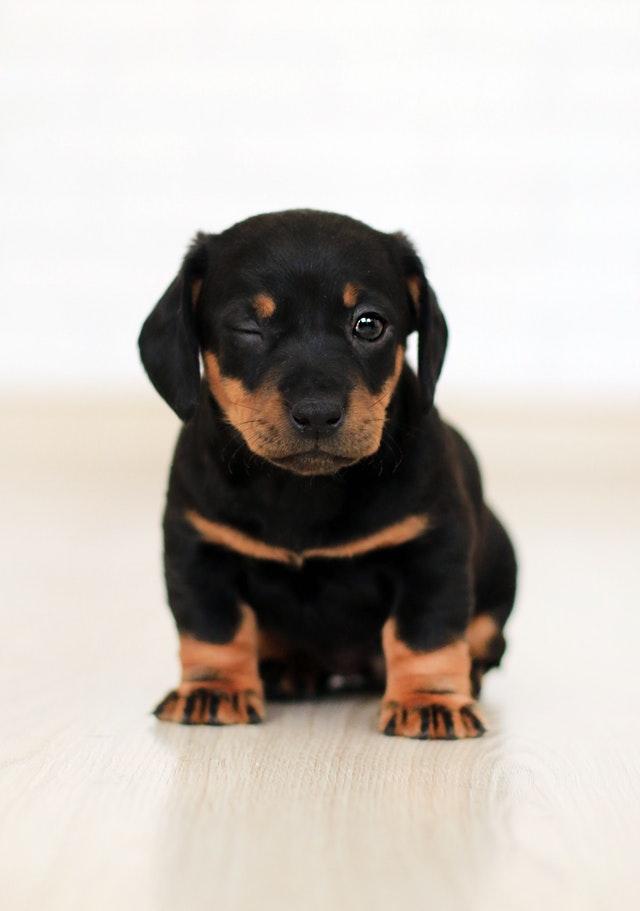 les éducateurs canin comportementaliste respectdogs de rouen et d'evreux en normandie vous conseil dans l'éducation du chien et du chiot