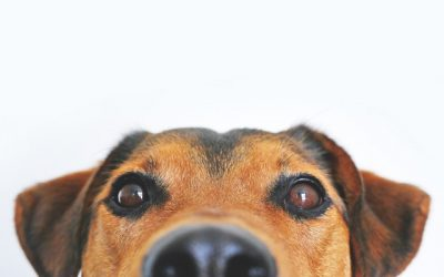 Education du chien et comportement, les bases !