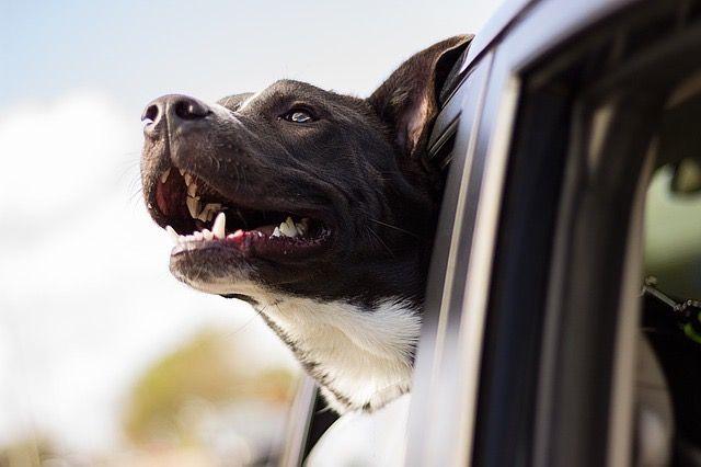 Les 4 commandements pour voyager avec son chien !