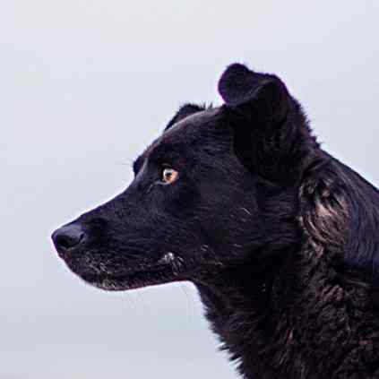 cours éducation canine en ligne respectdogs