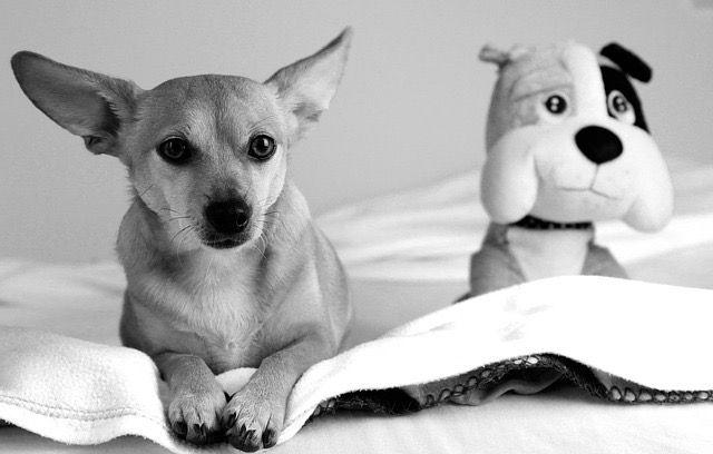 Faîtes-voyager votre chien confortablement et en sécurité avec les conseils des éducateurs canin respectdogs