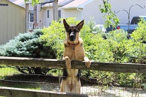 mon chien garde beaucoup en aboyant, est-ce normal ? les dresseurs canins respectdogs du 76 et 27 répondent