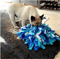 voyager-en-sécurité-avec-son-chien-les-éducateurs-canins-respectdogs