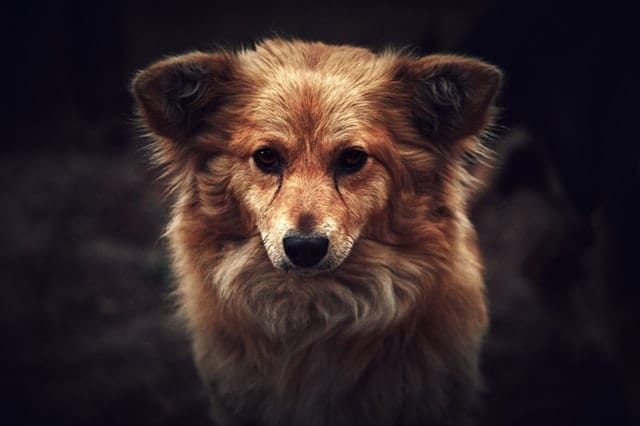 comment rendre mon chien plus heureux s'il semble triste, avec respectdogs éducation canine