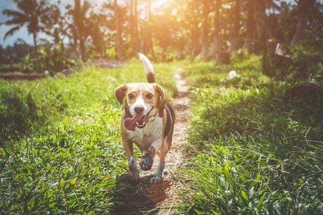rendre mon chien heureux en comblant son besoin d'exercices physique, les recommandations des éducateurs canins respectdogs