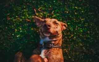 Comment rendre mon chien heureux ?