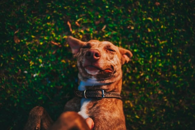Retrouver comment combler les trois besoins essentiels du chien pour le rendre plus heureux grâce aux astuces des éducateurs canins respectdogs