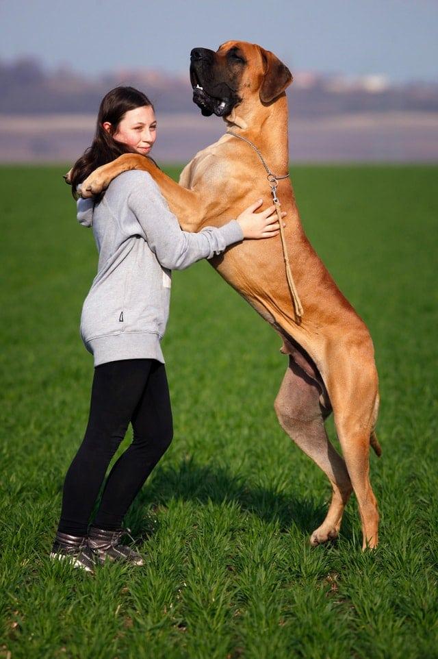 les soin après une séance d'ostéopathie canine