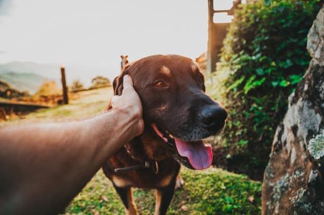 trouver un comportementaliste canin à domicile