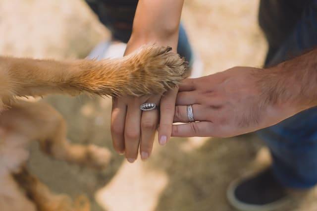 formulaire d'évaluation rapide du comportement de votre chien pour un programme d'éducation canine personnalisé