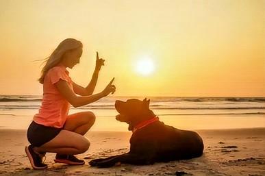 Dressage chien par un éducateur canin à domicile Respectdogs