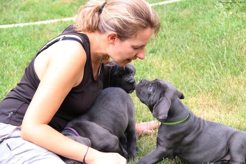 Courir avec son beagle, un chien plein d'énergie. Découvrir le beagle avec les éducateurs canins respectdogs