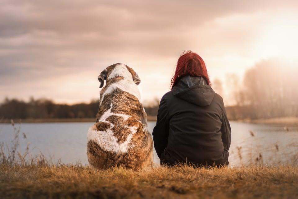 Un chien obèse avec une femme assis par les spécialistes respectdogs