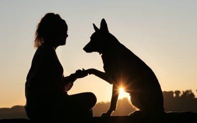 Comment devenir éducateur canin