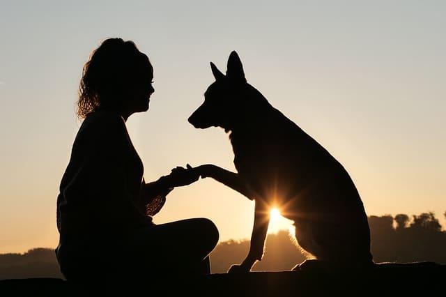 Un chien avec un éducateur canin par les comportementalistes respectdogs