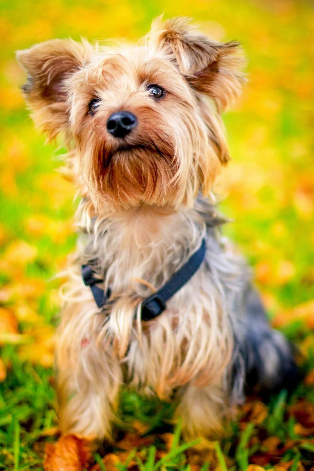 comportementaliste canin à domicile