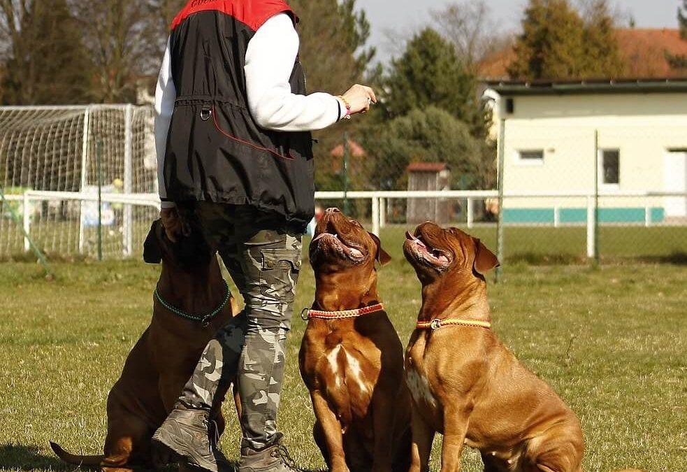 Fiche métier Comportementaliste canin