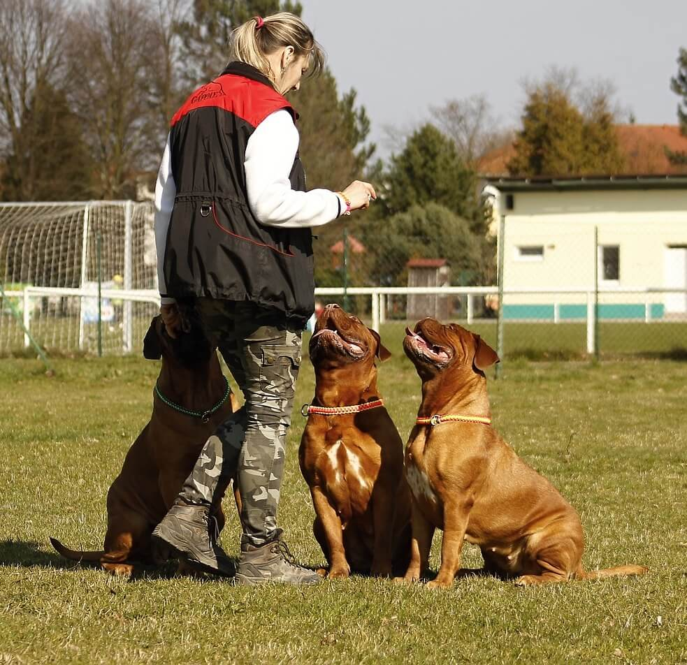 éducateur canin 27 à domicile