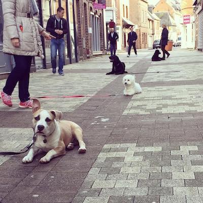 les cours collectifs sont un très bon moyen de faire progresser votre chien en obéissance