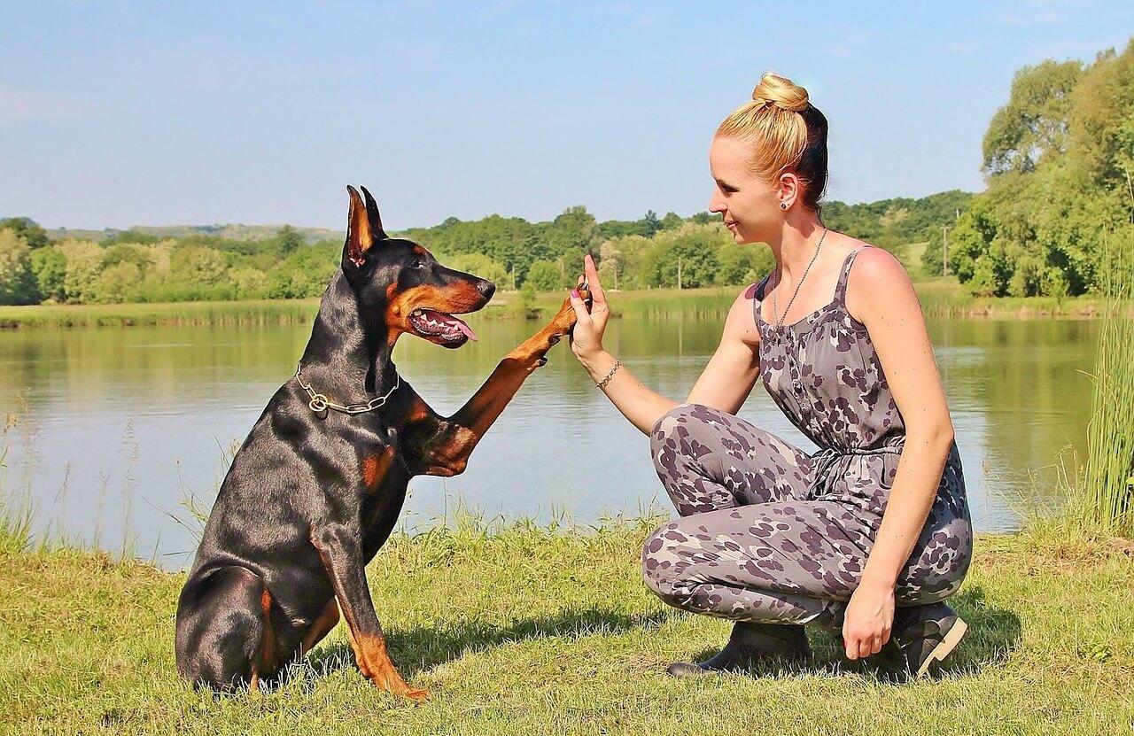 Tarif éducateur canin  Éducateur Canin à domicile Respectdogs