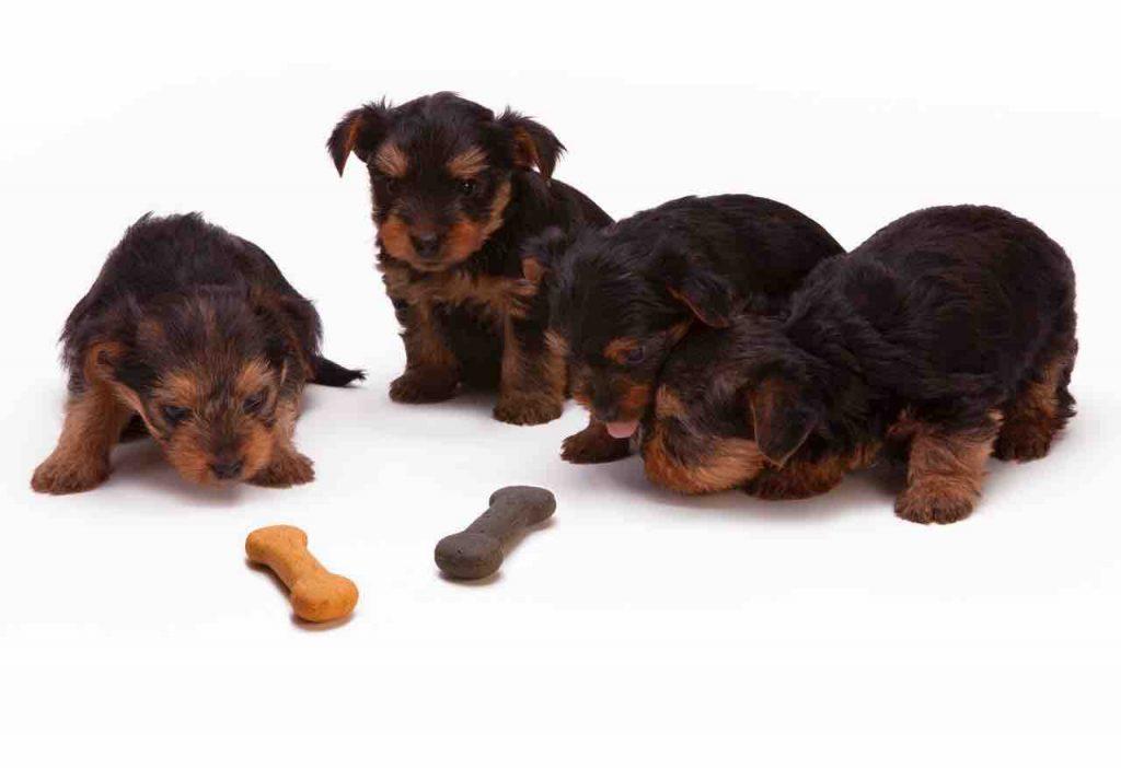 Comment trouver un bon comportementaliste canin ? 10 conseils pour trouver un comportementaliste canin professionnel et compétent. comportementaliste chiot