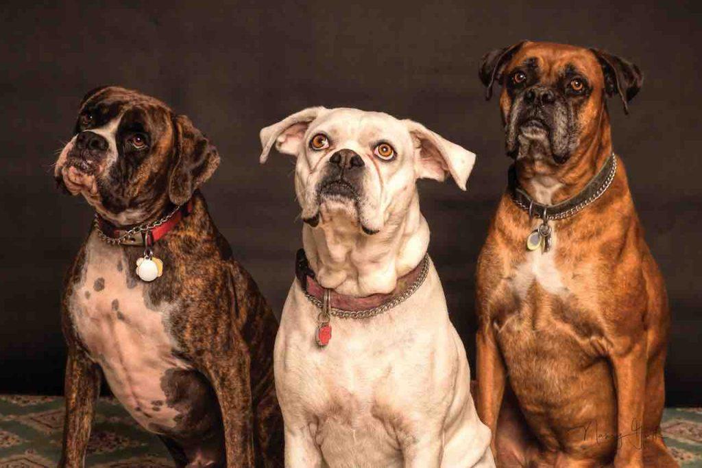 Quelle difference entre educateur canin et comportementaliste ? différence educateur canin comportementaliste