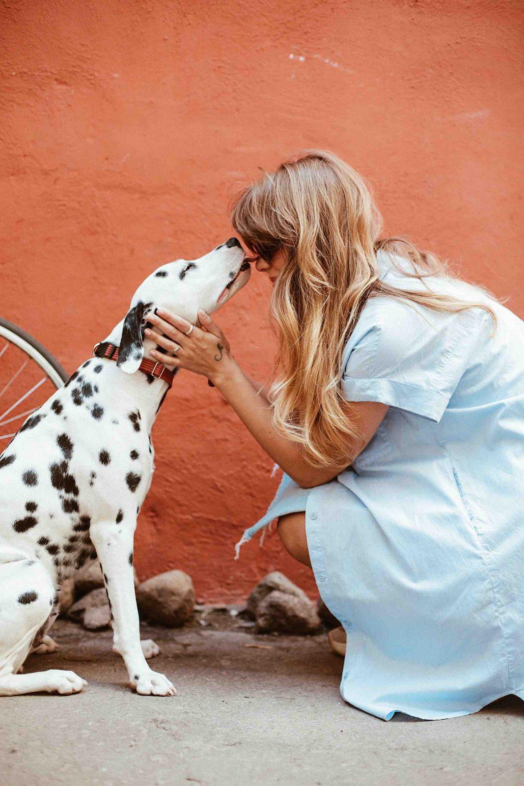 dressage chien normandie