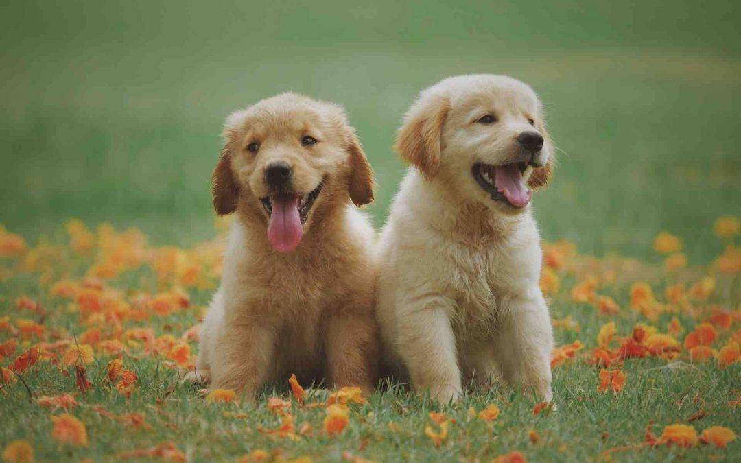 Adopter un chien à Rouen : une Association pour l'Adoption de chien Rouen