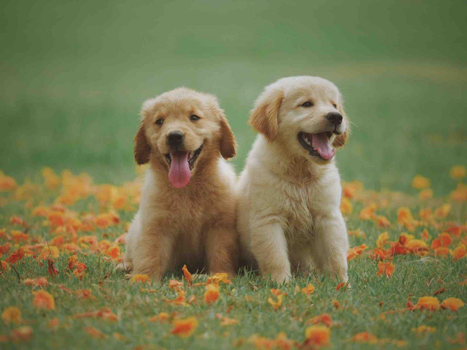 Un chien avec son propriétaire heureux par Respectdogs
