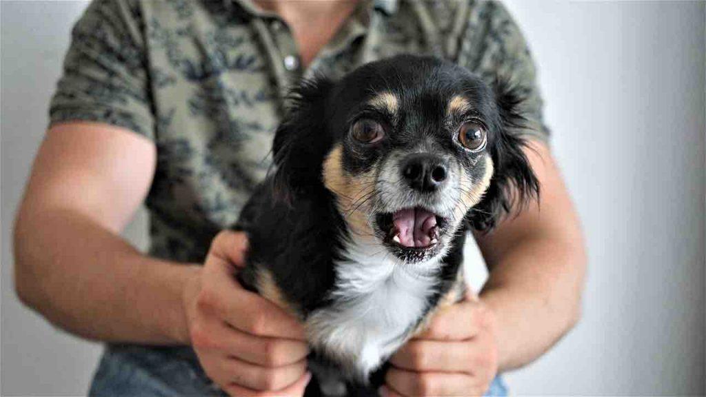 travail du comportementaliste canin avec un chien apeuré