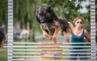 Dog CrossFit : Tout savoir sur le sport canin Dog Cross Fit