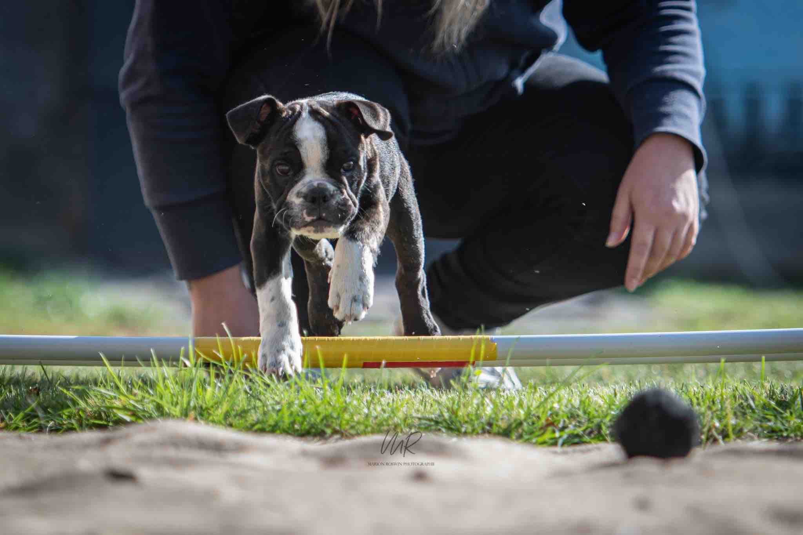 dog crossfit long jump